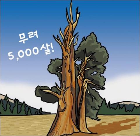 세계에서 가장 오래 산 나무
