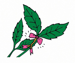 [식물의 비밀] 그늘에만 있는 식물은 어떻게 살까?