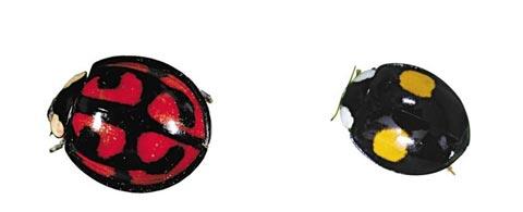 다양한 무늬의 무당벌레들.
