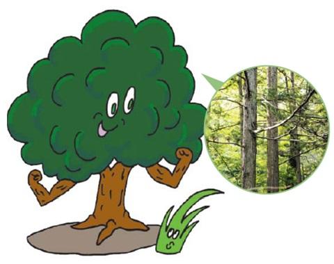 나무는 어떻게 우뚝 서 있을까?