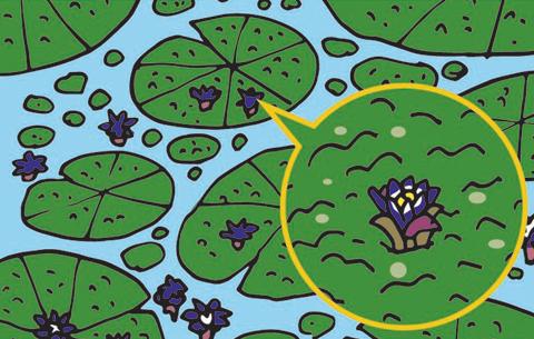 [식물의 비밀] 가시연꽃