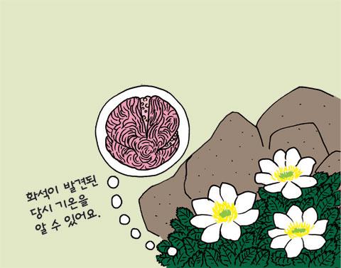 식물의 비밀