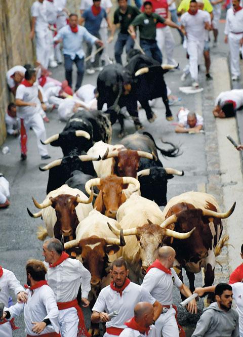 소몰이 행사 참가자들이 소를 피해 달아나고 있다.