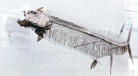 1억 년 전에서 6600만 년 전 사이에 살았던 고대 물고기 '크시팍티누스'.