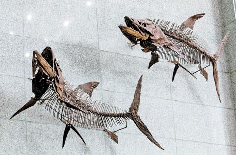 육식성 바닷물고기 파키리조두스. 오늘날의 다랑어처럼 작은 해양 동물을 잡아먹으며 살았다.