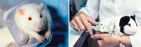 (왼쪽부터)동물 실험에 사용된 쥐. 인간의 실험 대상으로서 고통받는 동물들./Janet Stephens·Linda Bartlett