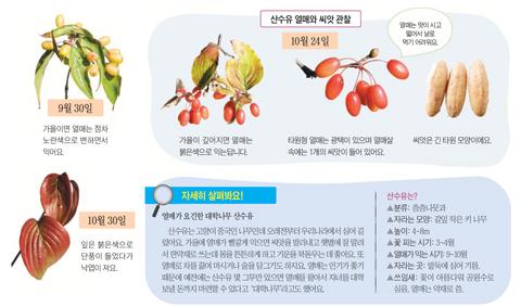 [아는 만큼 보이는 나무] 산수유 열매