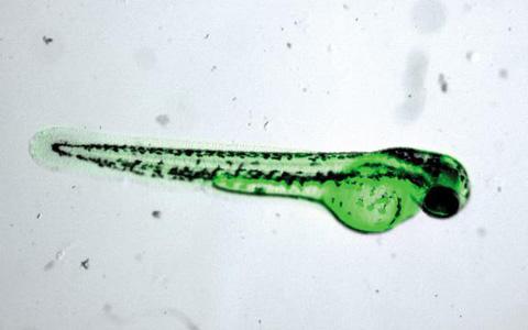 초미세 플라스틱 독성, 국내 연구진 첫 규명