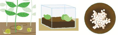 [꼬마 정원사] (4) 달팽이