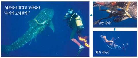 마카나 몰디브 여행사 홈페이지