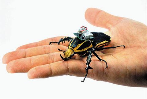 딱정벌레는 비행 능력이 뛰어나고 자기 몸집에 비해 무거운 것을 운반할 수 있어 재난 현장 등에서 다양하게 활용 가능하다.