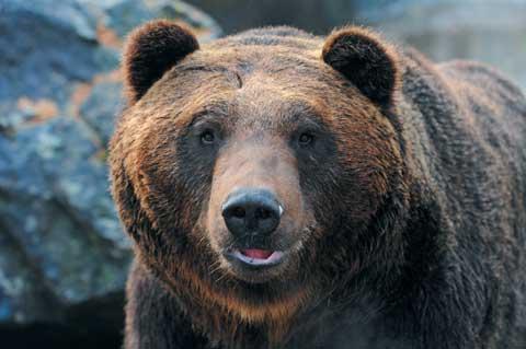 [에버랜드 알쏭달쏭 Quiz!] 곰 중에선 내가 가장 크지!